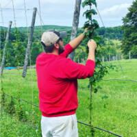 hager-hops-Harvest-Vine-Northway